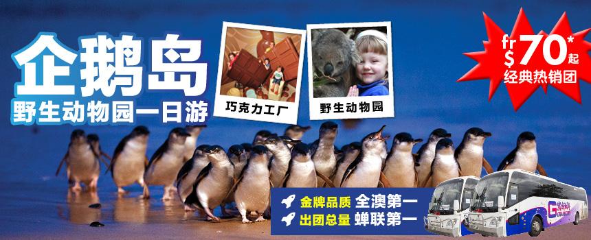 企鹅岛一日游
