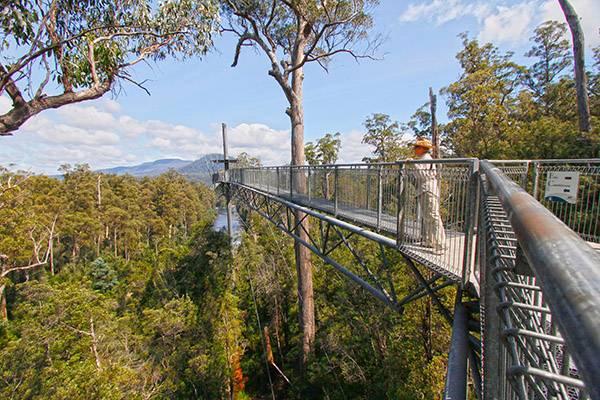 【塔斯马尼亚】树顶穿行空中漫步原始生态一日游