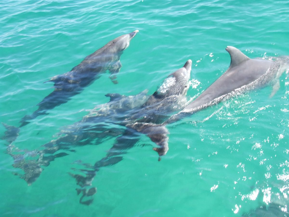 【布里斯班码头】游轮往返摩顿海豚岛Moreton Island 喂海豚+滑沙+海洋保育中心体验馆一日游