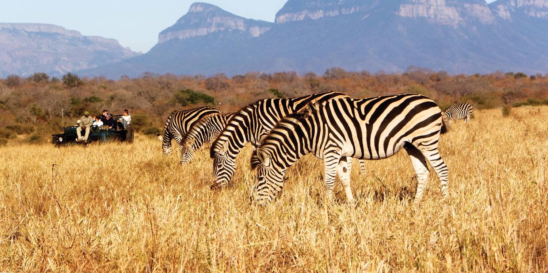 南非6天野生动物探险之旅